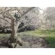 Kew Gardens Bloom
