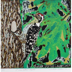 Lesser Spotted Woodpecker print