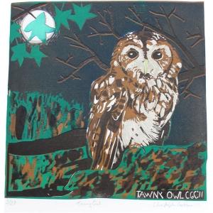 Tawny Olw print