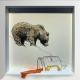 Big Honey Bear drawing by Damilola Odusote