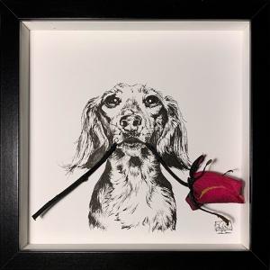 Dachshund Mono Portrait Rose