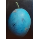Blue Plum oil painting by Dani Humberstone