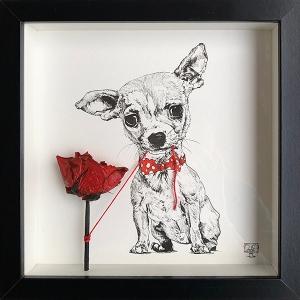 Chihuahua Rose